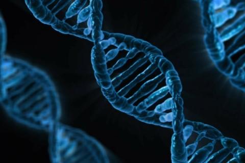 Ученые смогли расшифровать впервые в истории весь геном человека