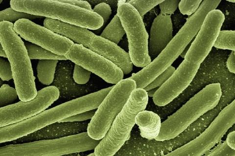 Ученые: Кишечные бактерии влияют на поведение