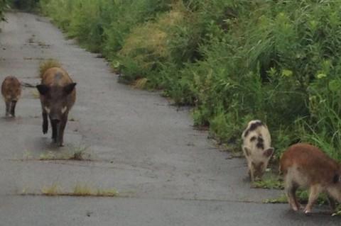 Невероятный эксперимент: в окрестностях Фукусимы появились новые виды животных