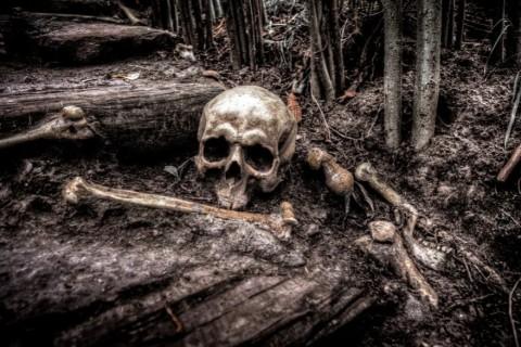 В Южной Корее ученые нашли останки гиганта
