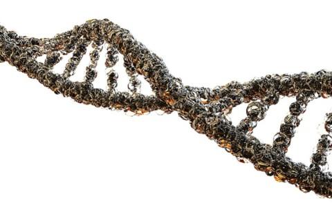 Ученые: Только 7% нашей ДНК уникальны для современных людей
