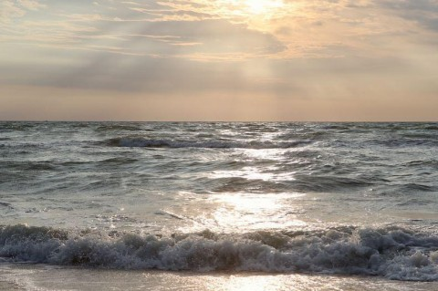 Ученые: Азовское море заполонили медузы