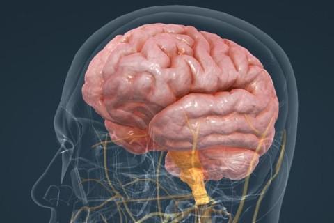 Ученые назвали неожиданные факторы, которые влияют на уменьшение мозга человека