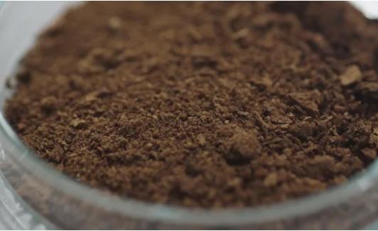 Уже сварили и попробовали: в Финляндии ученые вырастили кофе в лаборатории